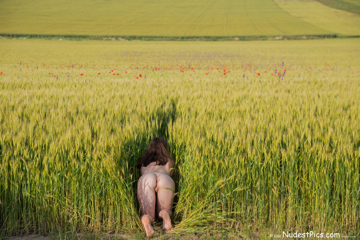 Naked Woman Crawling in the Field of Wheat